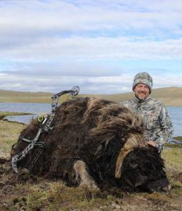 Jason Stafford Musk Ox
